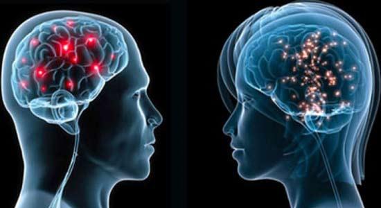 quel-est-le-role-de-notre-cerveau-lors-de-la-rencontre-amoureuse-12